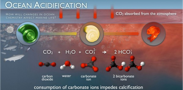 OceanAcidification